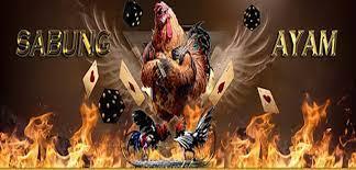 Permainan Sabung Ayam Tidak ada Kemenangan